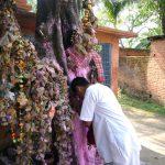 Desire-trees in Shantipur
