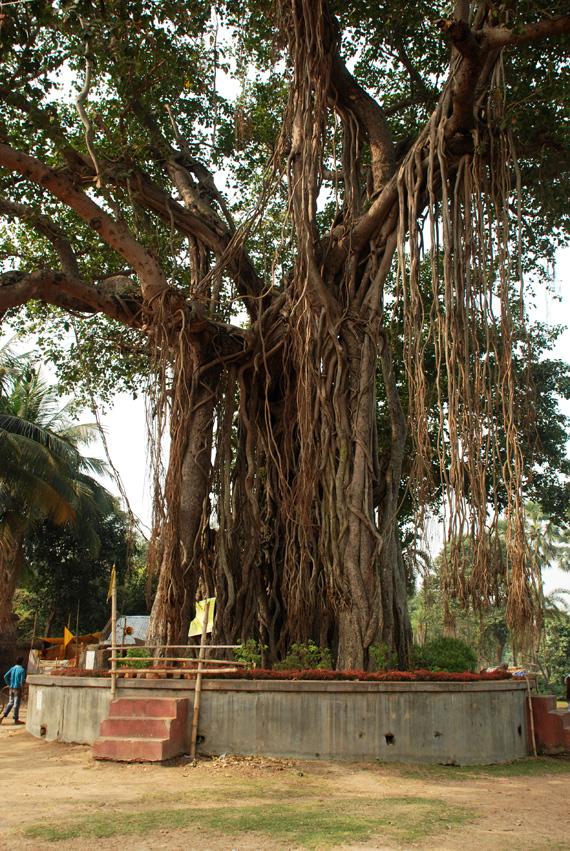 Puspa-Samadhi-of-Srinivas-Acharya