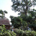 Kaliya Ghat Vrindavan