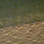 The sparkling water of Srimati Yamuna
