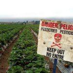 Indian Veggies, Fruits Remain Highly Toxic