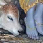 Calf near Krishnas Lotus Feet