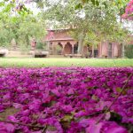 Open letter about the merger of Mathura and Vrindavan
