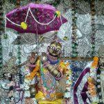 Radhadamodar's darshan on Vamandev jayanti