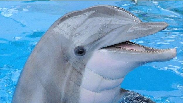 delfin_large