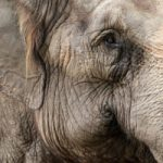 The Amazing Inner Lives of Animals