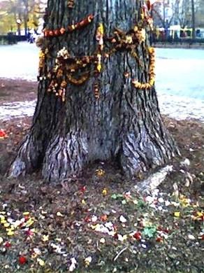 hare_krishna_tree