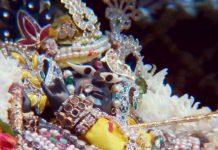 The beautiful deity of Sri Radha Raman, who manifested to Sri Gopal Bhatt Goswami