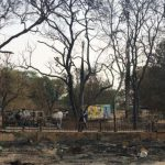 8000 trees destroyed in Jawahar Bagh
