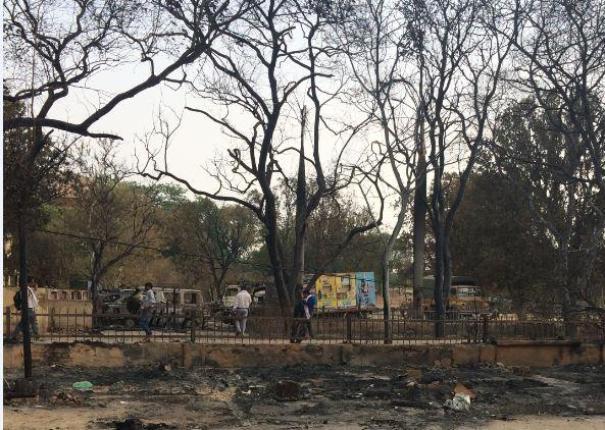 Jawahar-Bagh-trees