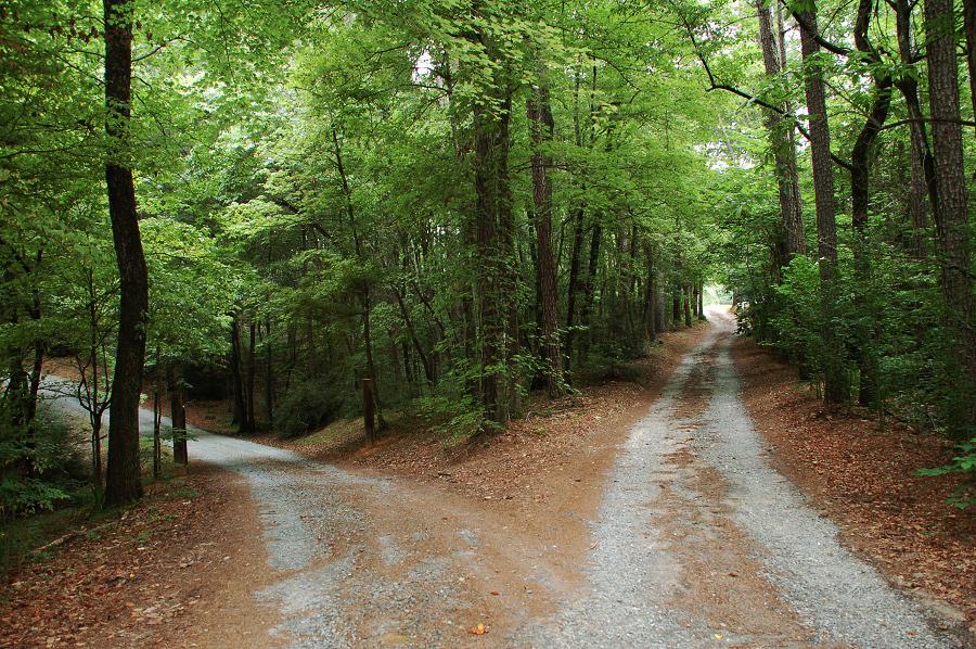 Road-Fork