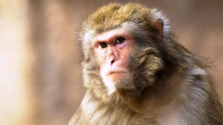 monkey-780x439