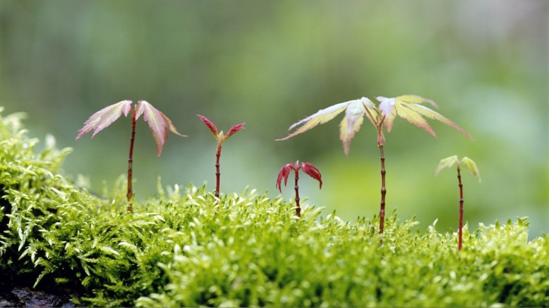 Forests-and-Saplings-Themes-for-Windows-7-8-780x438