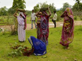 India planting 66 million trees