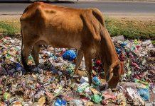 cow plastic india
