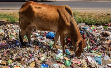 cow plastic india